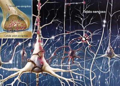neuronas2
